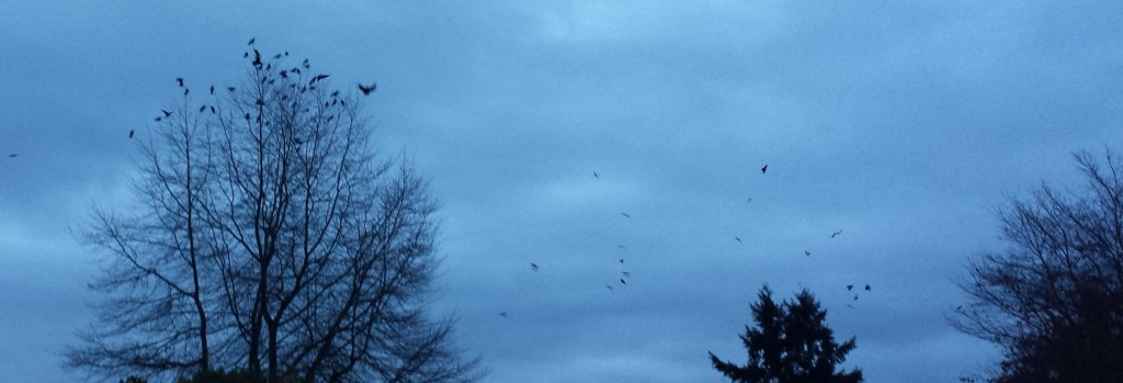 morning-crows-2-1024x349