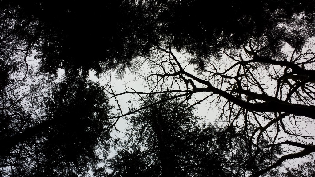 winter-forest-sky-1024x576